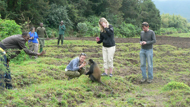 2 days Golden Monkey trekking